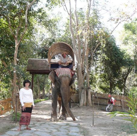 Ban Xieng Lom, Laos: Visit of Elephant