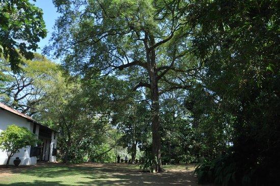 Bawa House 87: Garden Nature
