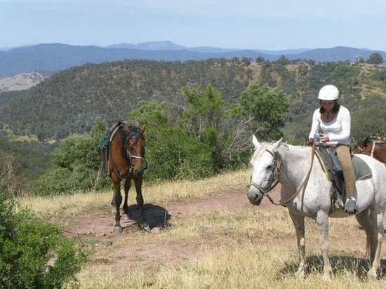Watson's Mountain Country Trail Rides - Day Tours: Having a rest at the top!