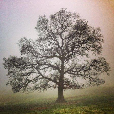 Ampleforth Abbey : Ampleforth on a VERY foggy day.