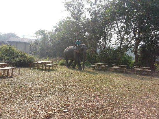 Diphlu River Lodge: Getting Ready for Elephant Bathing