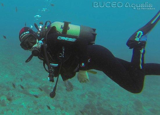 Buceo Aqualia La Herradura: Cursos personalizados