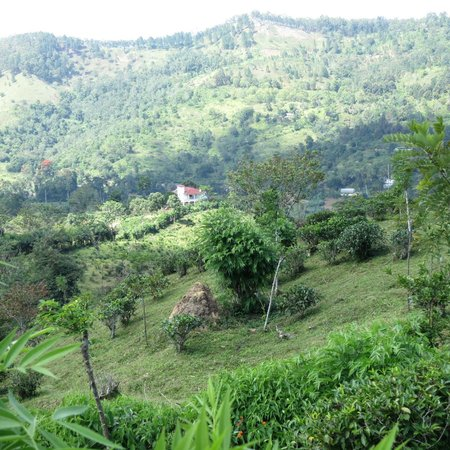 Morning Mist Guesthouse: As you climb the hill above the house