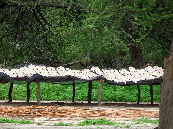 Lake Ngami : Fish drying