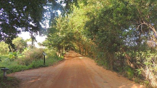 Jetwing Vil Uyana : le chemin menant à notre chambre...