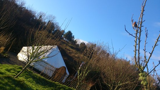 Ireland Glamping - Pink Apple Orchard: Winter Bird watching in Pink Apple Orchard.