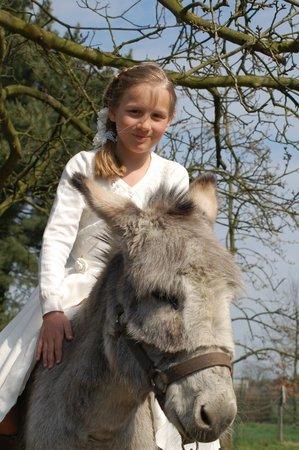 B&B Vennehoeve: donkey riding