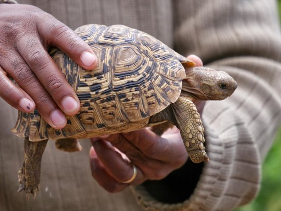 Mosetlha Bush Camp & Eco Lodge: Tortoise