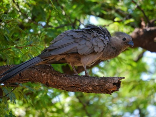 Mosetlha Bush Camp & Eco Lodge: Wildlife