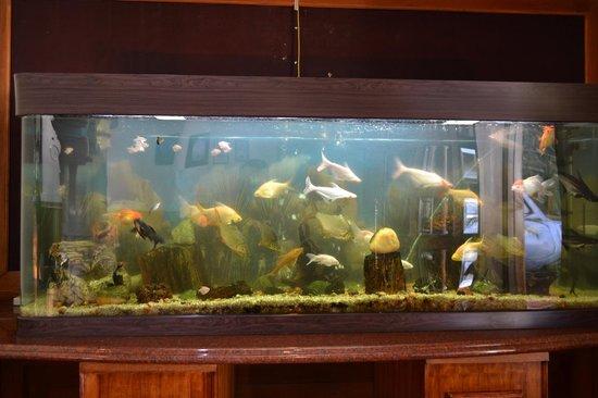 Gem Park-Ooty: Fishtank in the main hall