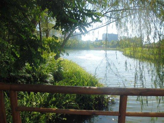 Grand Luxxe Nuevo Vallarta: view of grounds