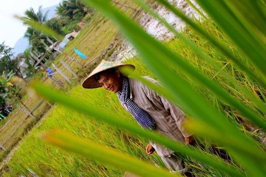 The Living Land Company: Our guide in the rice field