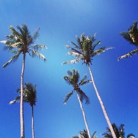 Coco Lanta Resort: palme coco lanta