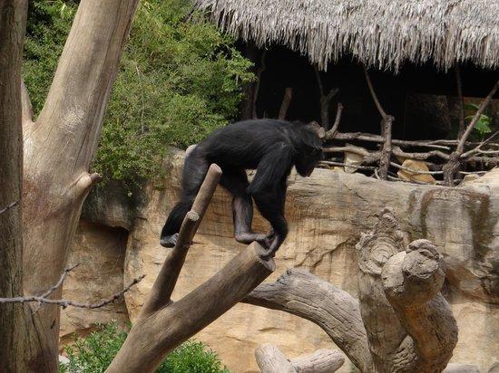 Bioparc Fuengirola: mono