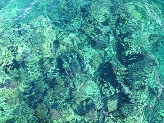 Kempinski Hotel Soma Bay : Corals and house reef - crystal clear waters