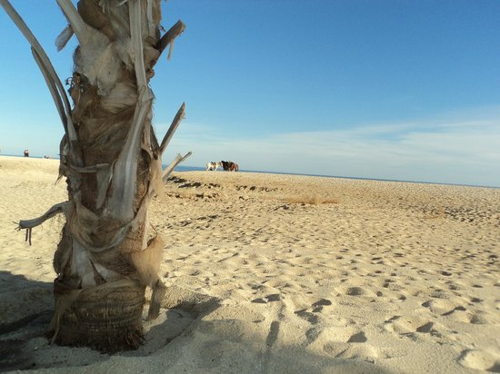 Hyatt Place Los Cabos : Clean beach