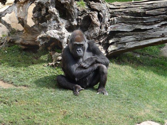 Bioparc Fuengirola : mono
