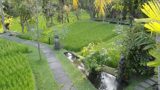 Ananda Cottages: La vue depuis la terrasse de la chambre