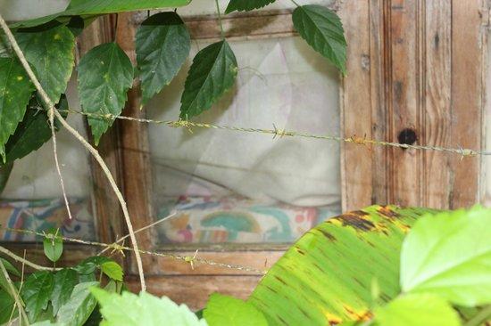 The Lotus Garden: Zerbrochene Fensterscheibe