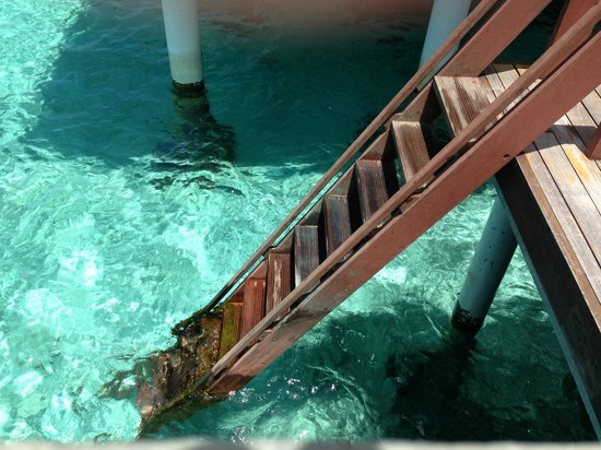 Coco Bodu Hithi: Stairs from the villa to the sea for snorkelling