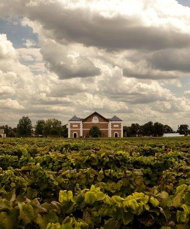 Delaney Vineyards in July