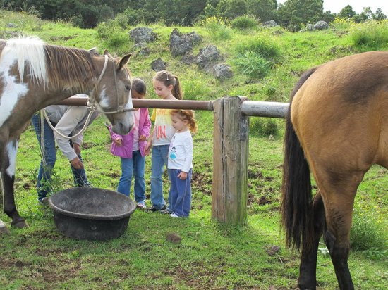 Thompson Ranch Riding Stables: The kids got to feed the horses.