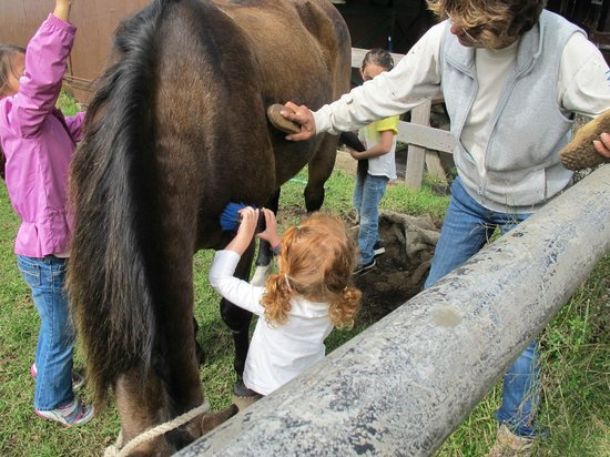 Thompson Ranch Riding Stables: The kids got to brush a horse.
