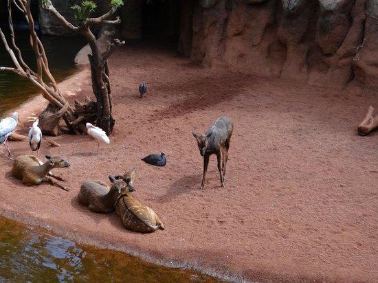 Bioparc Fuengirola : animales varios