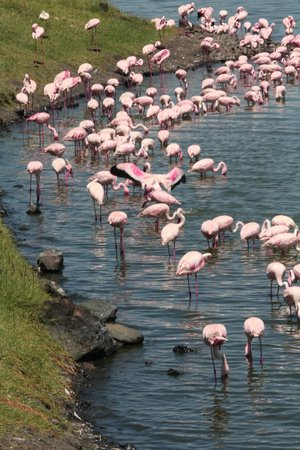 Full-Day Arusha National Park Tour with Lunch: Flamingos in Arusha Nat. Park