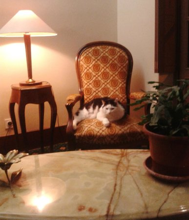 Hotel Heliot : Accueil du chat dans le hall d'entrée