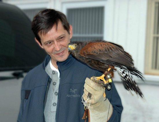 Green Mountain Falconry School: Harris Hawk Bonding