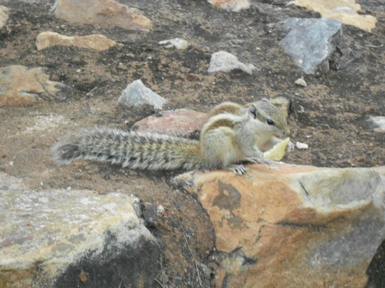 squirrel at alai minar