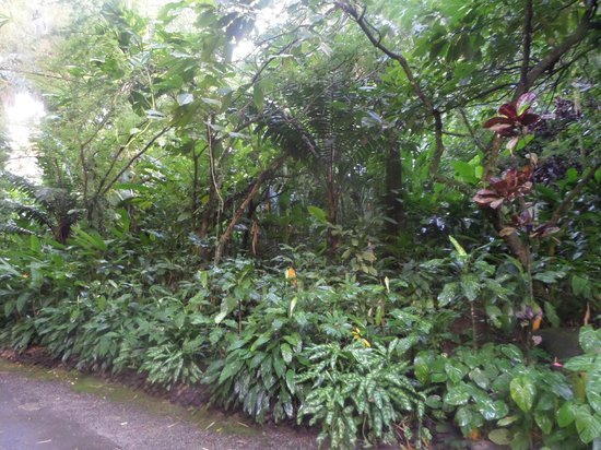 St. Lucia Rain Forest : More tropical plants