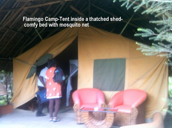 AsaRay Private Day Tours: Flamingo Camp:Comfy Tent within a Thatched hut.