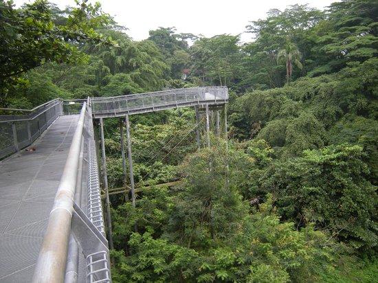 The Southern Ridges: Canopy Walk