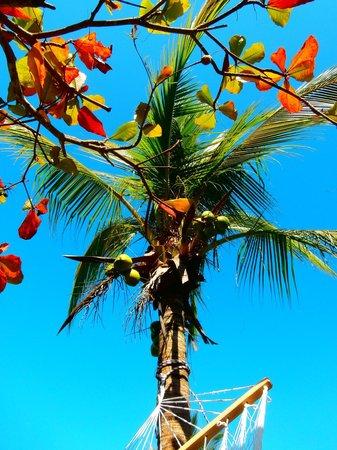 Los Suenos Marriott Ocean & Golf Resort: The view from the hammock