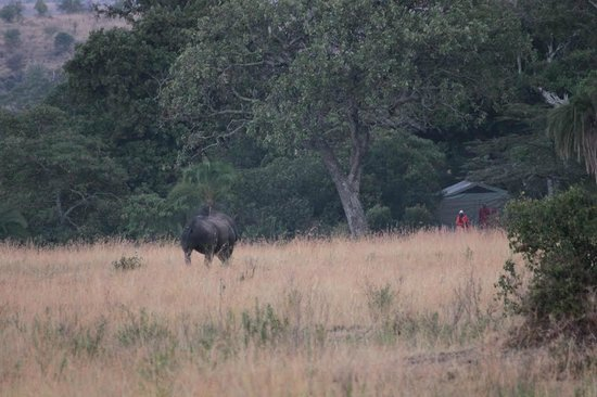 Enkewa Camp : Rhino in Bushcamp