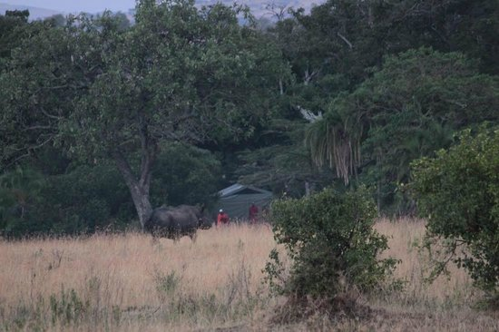 Enkewa Camp : Rhino next to the tents