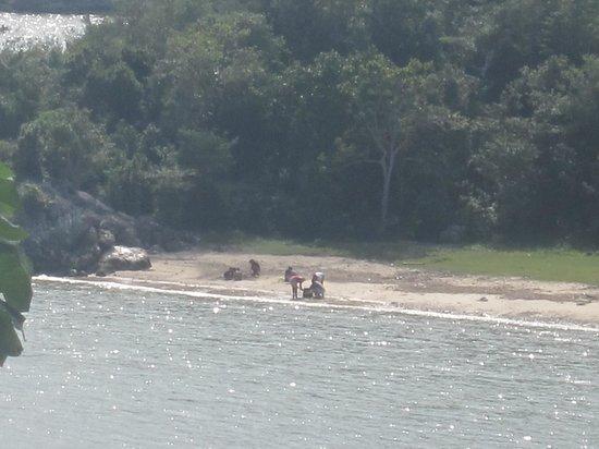 Casa Particular : la petite plage à proximité de la chambre