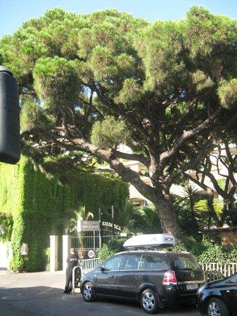 Pierre & Vacances Residenz Cannes Beach: Большое дерево при входе