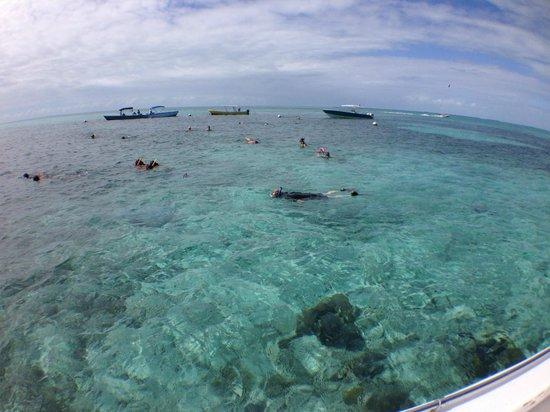 La Perla Del Caribe : snorkeling at Hol Chan