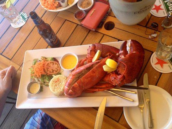 Skipjack's Seafood Grill, Bar & Fish Market : Двухкилограммовый омар