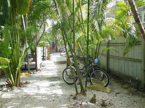 Tarpon Tale Inn: Shady Palms