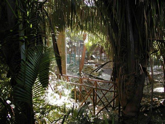 Grand Palladium Vallarta Resort & Spa: Tropical Gardens Throughout