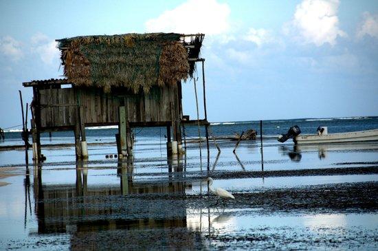 Tranquility Bay Resort: Beach