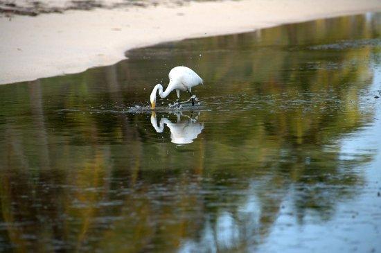 Tranquility Bay Resort: Egret