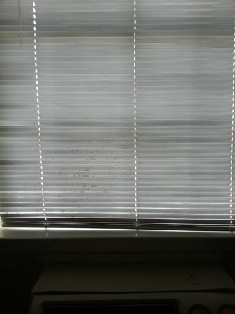 Homestead Inn: Stains on the blinds