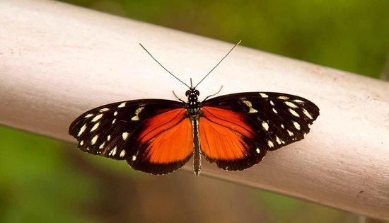 Museo Nacional (Nationalmuseum von Costa Rica): Vlindertuin