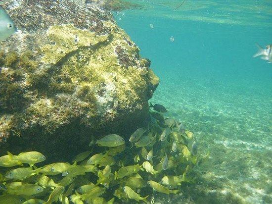 Secrets Aura Cozumel: Snorkling from the beach