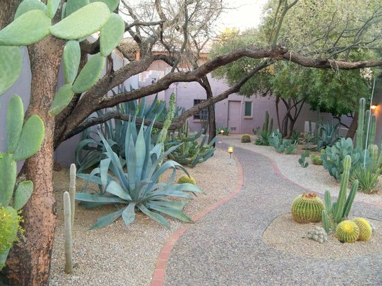 Lodge on the Desert: Beautiful grounds